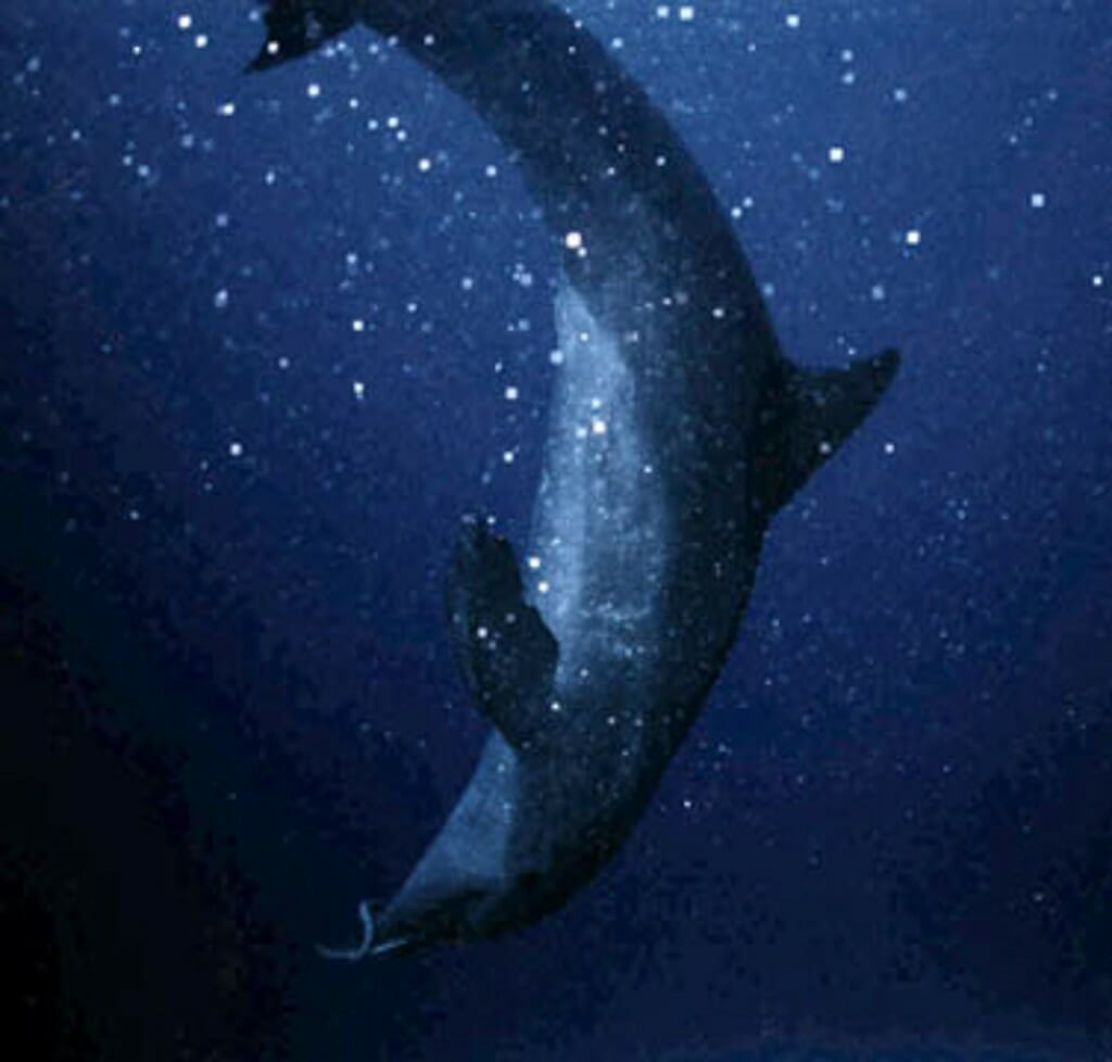 Dolphin and eel