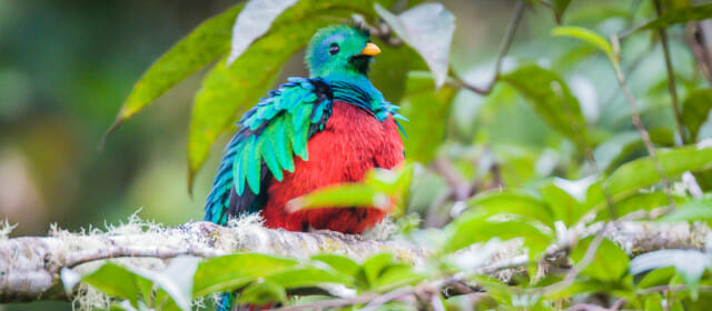The Quest for the Quetzal