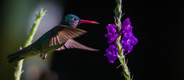 Lots of hummingbirds and one less camera