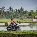 Rice Paddy Walk