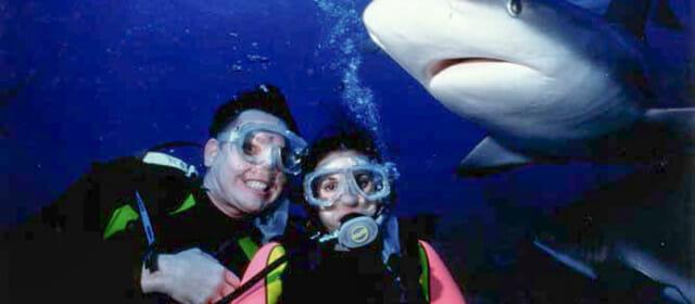 Bahamas Shark Dive