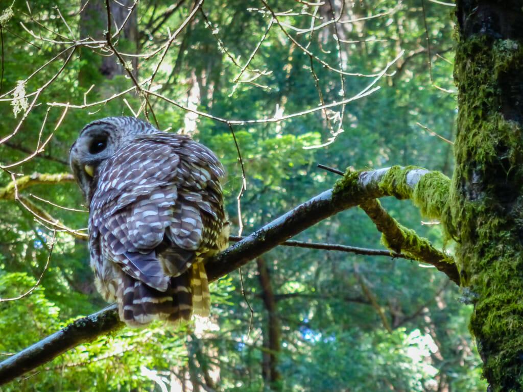 Hey look - an owl!