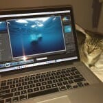 Feline supervision of photo editing